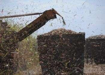 Zafra azucarera en Cuba