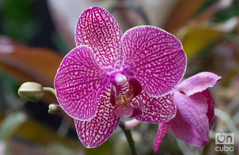 Orquidea--otm-10