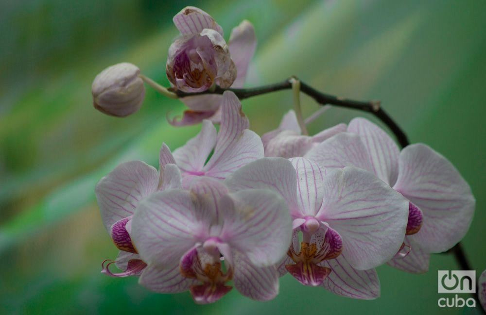 Orquidea--otm-20