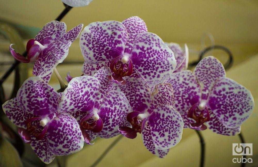 Orquidea--otm-21