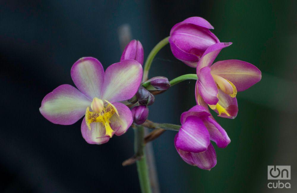 Orquidea--otm-4
