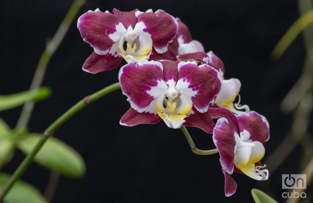 Orquidea--otm-8