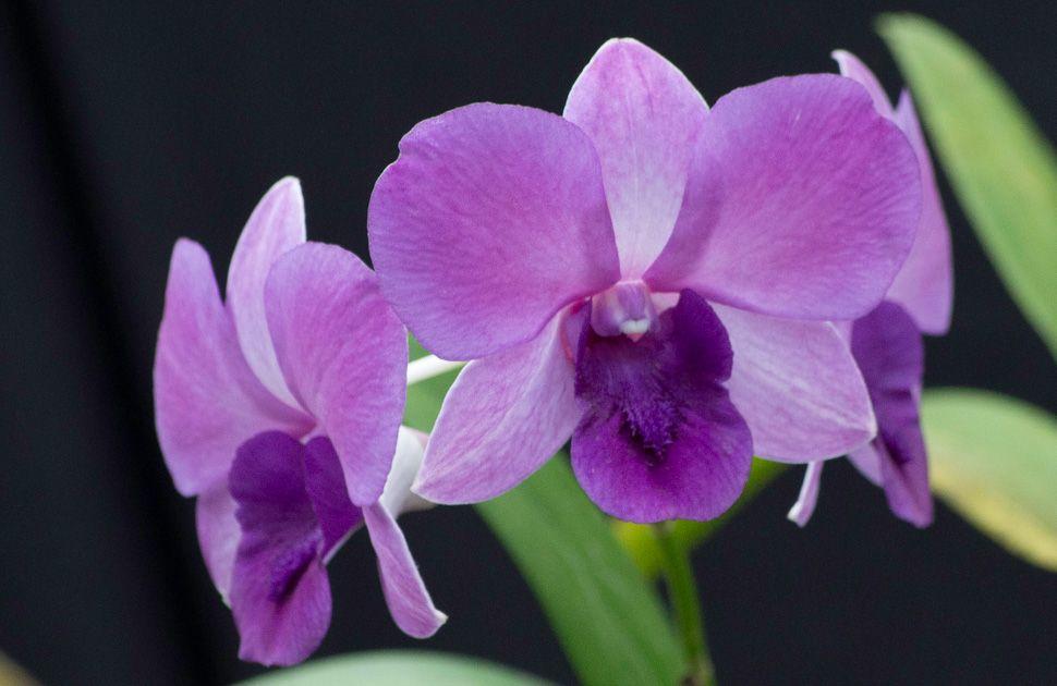 Orquidea--otm-9