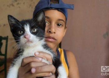Child in Lis Núñez's cat shelter in Guanabacoa. Photo: Otmaro Rodríguez.