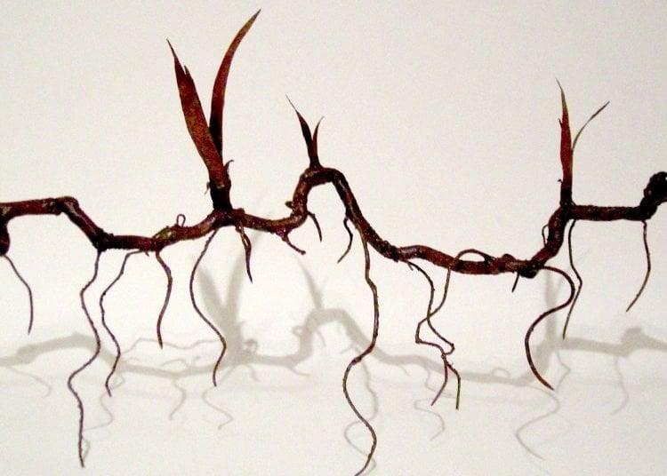 Rizoma (Fragment). Photo: Cristina Almodóvar.