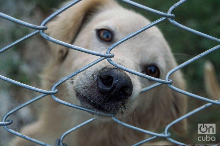 animal welfare law