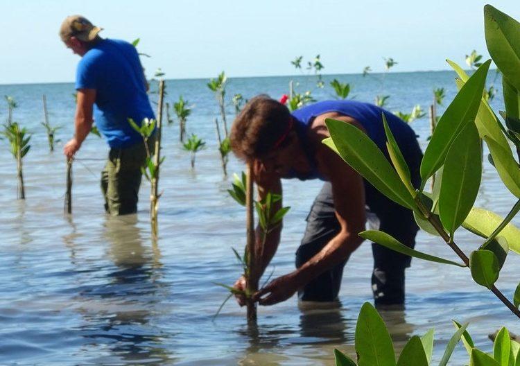 Cuban Environment: mangrooves