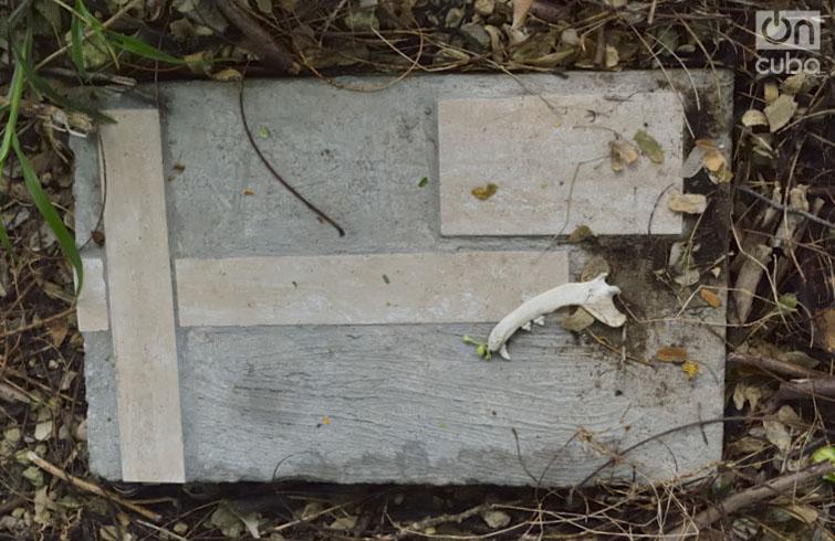 Tumba en el cementerio de perros. Foto: Otmaro Rodríguez.