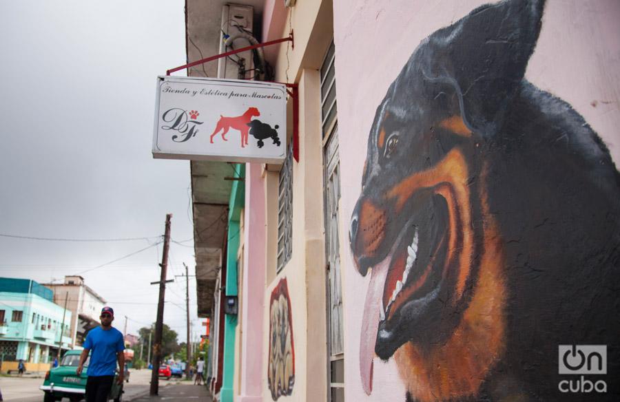 Uno de estos negocios es Dog's Fashion, en Playa. Foto: Claudio Pelaez Sordo.