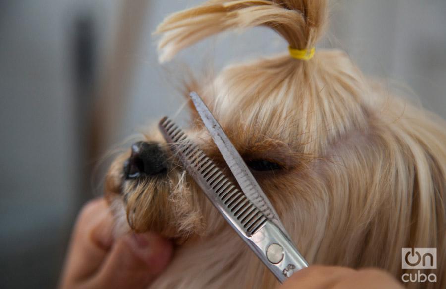 El tratamientodepende del perro, la raza y el temperamento de la mascota. Foto: Claudio Pelaez Sordo.