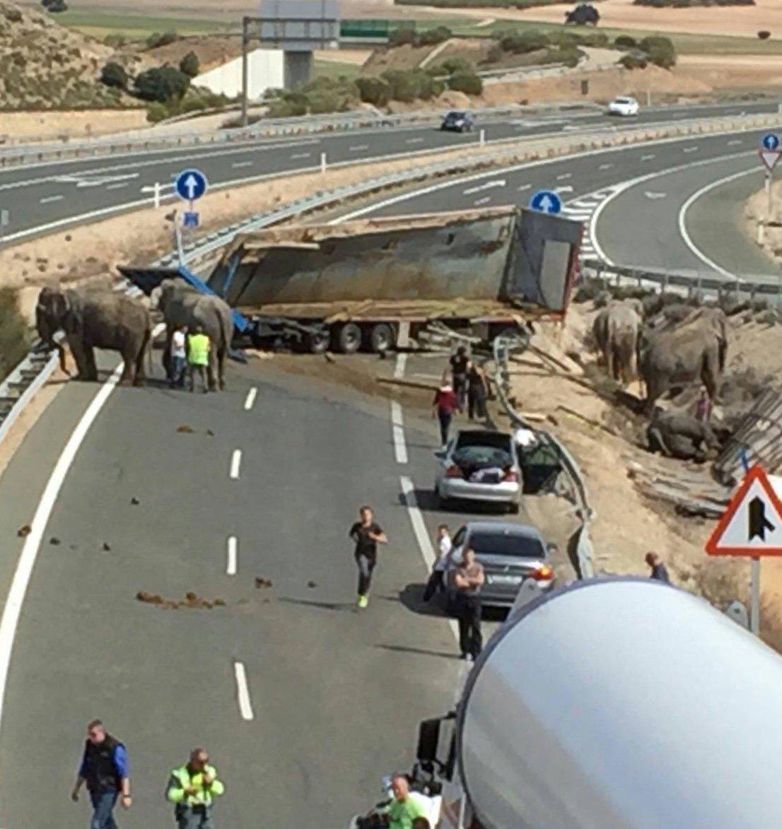 Cinco elefantes hembra que eran transportadas en un cambión de circo resultaron víctimas de accidente auotmovilístico. Foto: Twitter.
