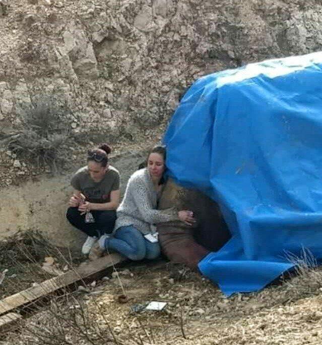 Una de las elefantas resultó muerta. Foto: Twitter.