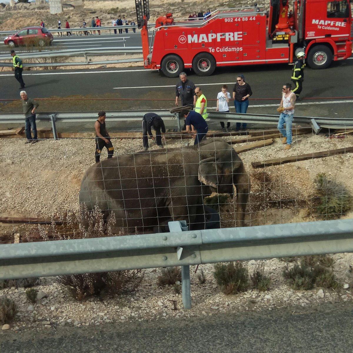 Organizaciones de defensa de los animales insisten en que deben aprobarse leyes que prohíban el uso de animales en los circos. Foto: Twitter.