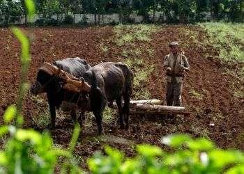 Agricultura en Cuba