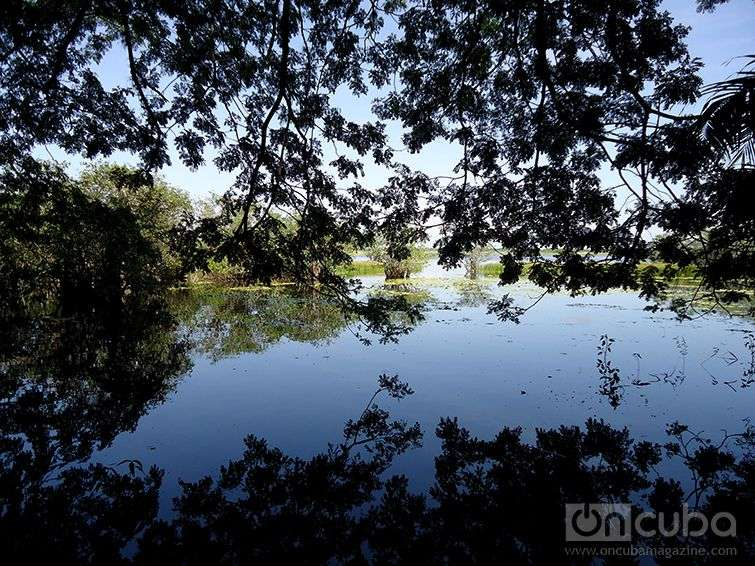 Great Northern Wetland in Ciego de Avila / Photo: Eric Yanes Rodriguez