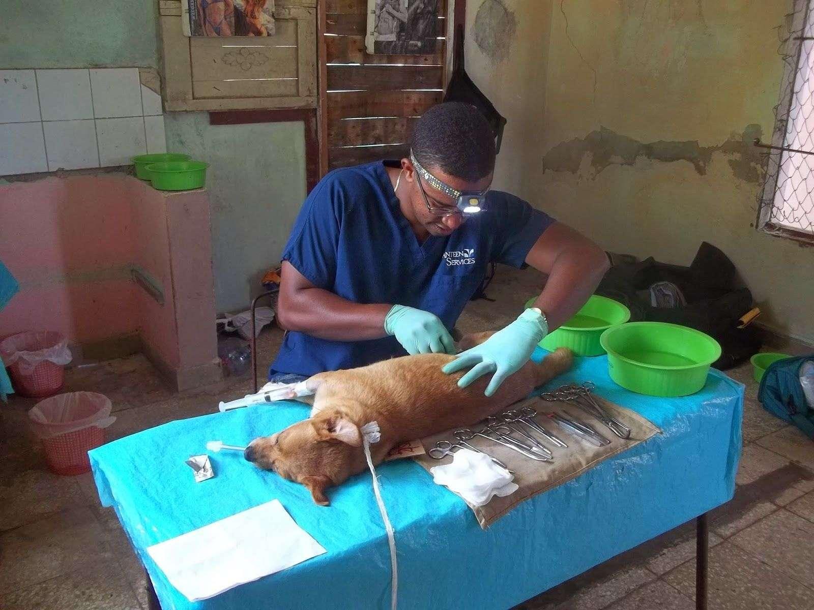 Clínica veterinaria en Cuba. Foto. ARPAC / Varadero / Archivo.