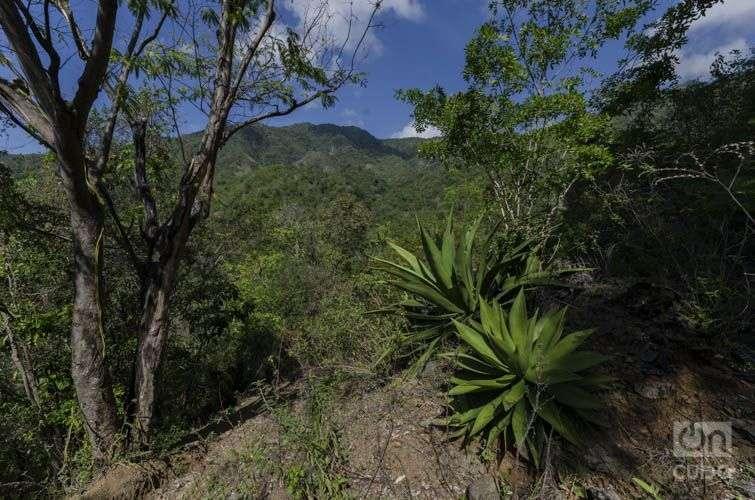 Parque Nacional Turquino, en el oriente de Cuba / Foto: Rolando Pujols