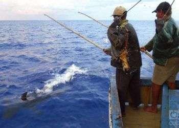 Los pescadores de bonito están habituados a trabajar entre decenas de tiburones / Foto: Ronald Suárez Rivas