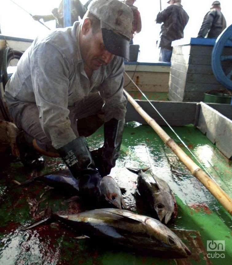Durante la pesca, uno de los tripulantes se dedica exclusivamente a lanzarle vísceras ensangrentadas a los tiburones / Foto: Ronald Suárez Rivas