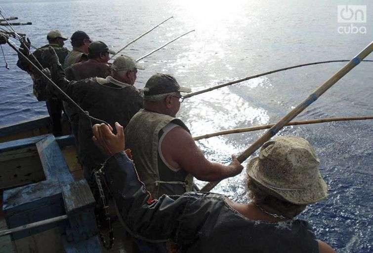 Aunque representan un peligro, sin tiburones no hay pesca de bonito / Foto: Ronald Suárez Rivas