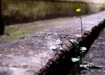 Imagen tomada de www.alhaurin.com