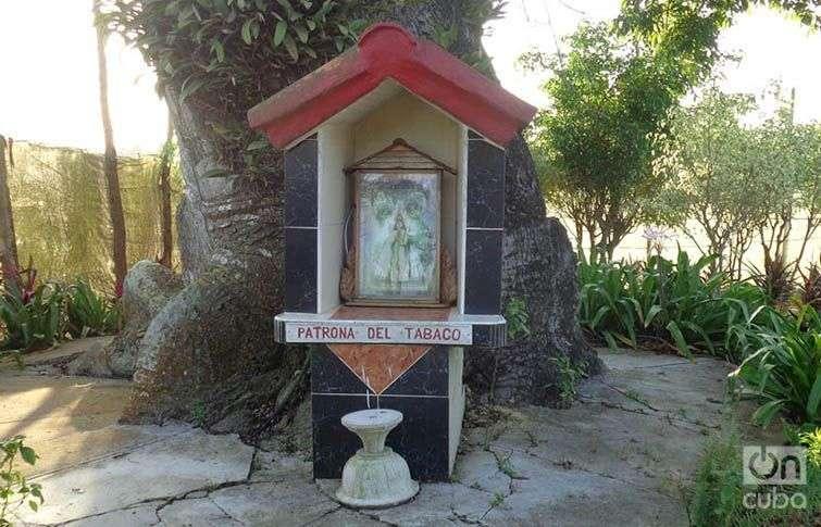 En la casa del conocido veguero cubano Alejandro Robaina, un altarcillo dedicado a La Virgen de las Nieves. Foto: Eduardo