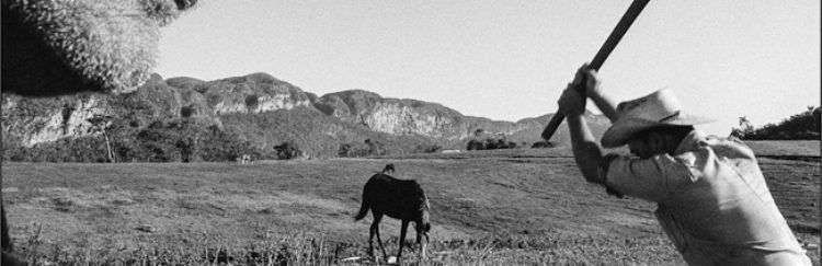 Carboneros en Viñales. Foto: Raúl Cañibano