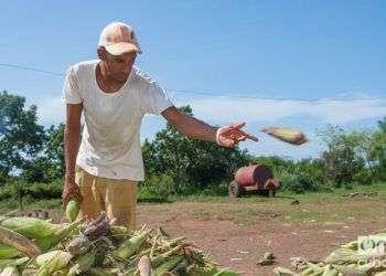 A pesar de los problemas con su agricultura, Cuba esté entre los países con menos personas subalimentadas en la región. Foto: Leandro A. Pérez Pérez.