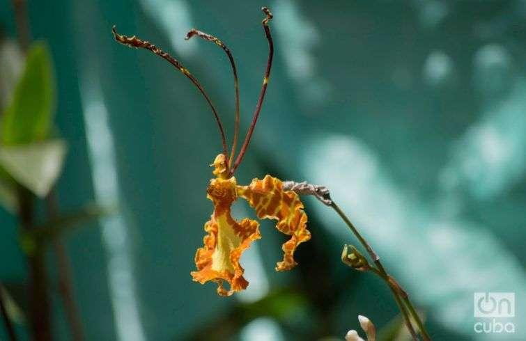 Orquidea--otm-11