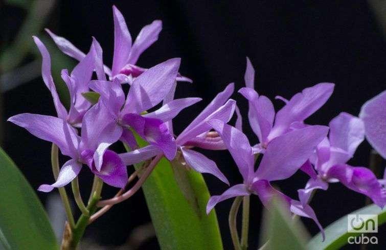Orquidea--otm-13