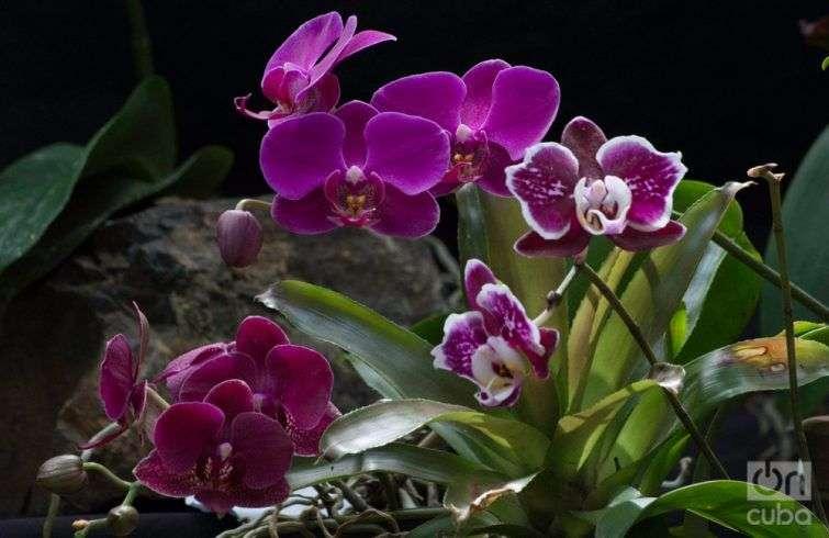 Orquidea--otm-14