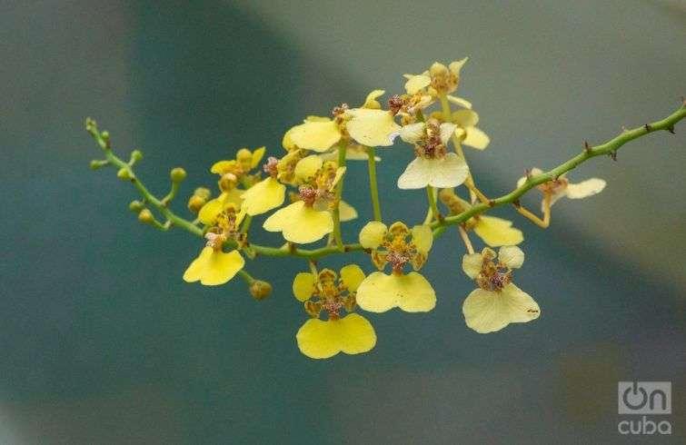 Orquidea--otm-5