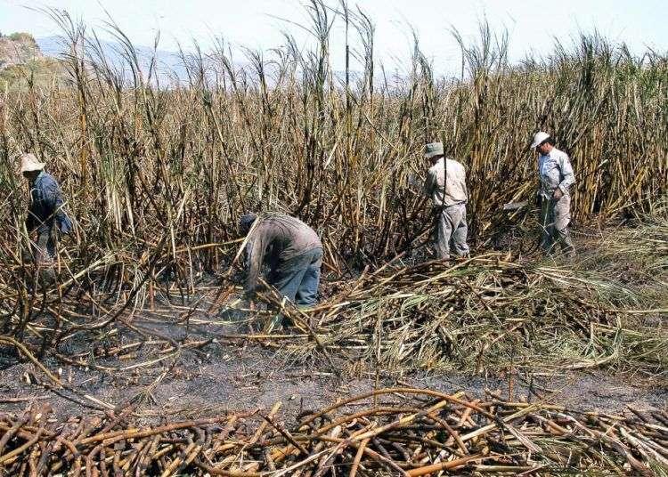 Foto: Maite Corsín.Zafra azucarera en Cuba. Foto: Maite Corsín.
