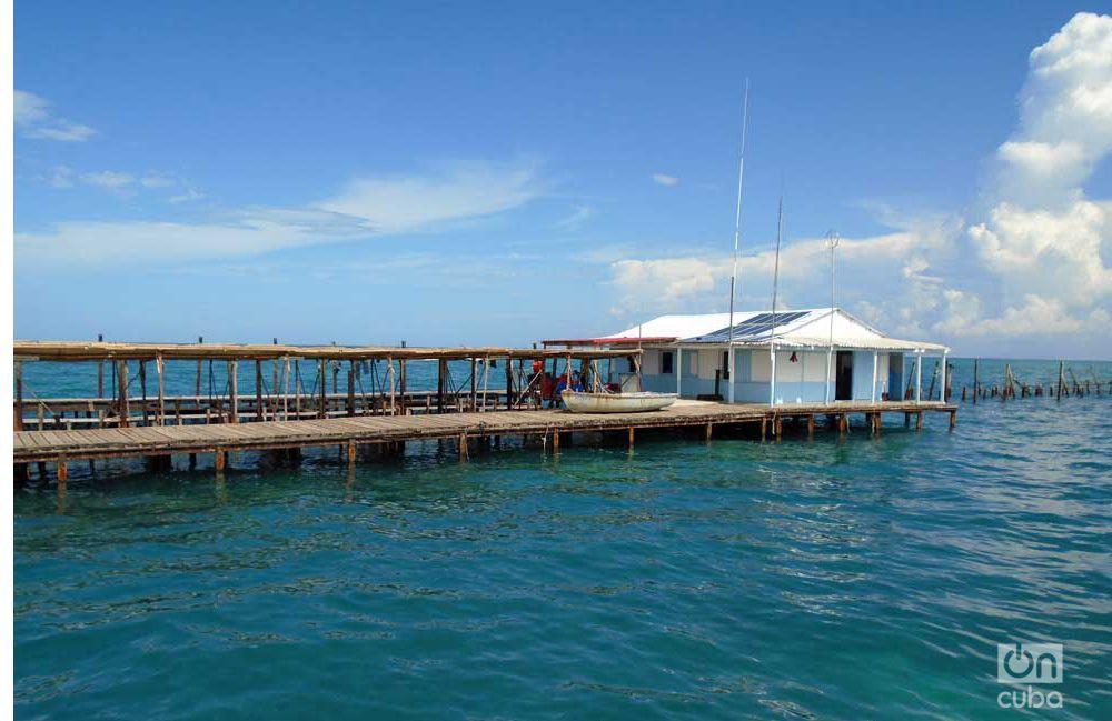Pesca de langosta. Foto: Ronald Suárez.