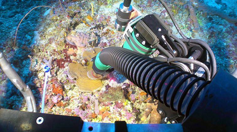 El ROV fue clave para la recogida de muestras durante la misión. Foto: Cuba's Twilight Zone Reefs and Their Regional Connectivity.