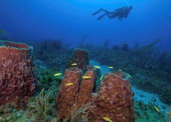 Comunidades de esponjas y corales en el Parque Nacional Guanahacabibes, Cuba. Foto: Jesse Cancelmo / Cuba's Twilight Zone Reefs and Their Regional Connectivity.