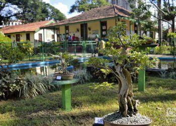 Festival del bonsái en la Quinta de los Molinos. Foto: Otmaro Rodríguez Díaz.