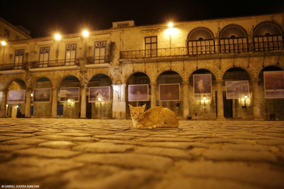 """""""Ya la exposición tuvo su primer visitante"""". Foto: Gabriel Guerra Bianchini."""