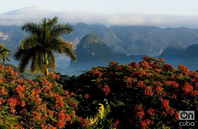 La naturaleza es uno de los grandes valores de Viñales. Foto: Guillermo Seijo.