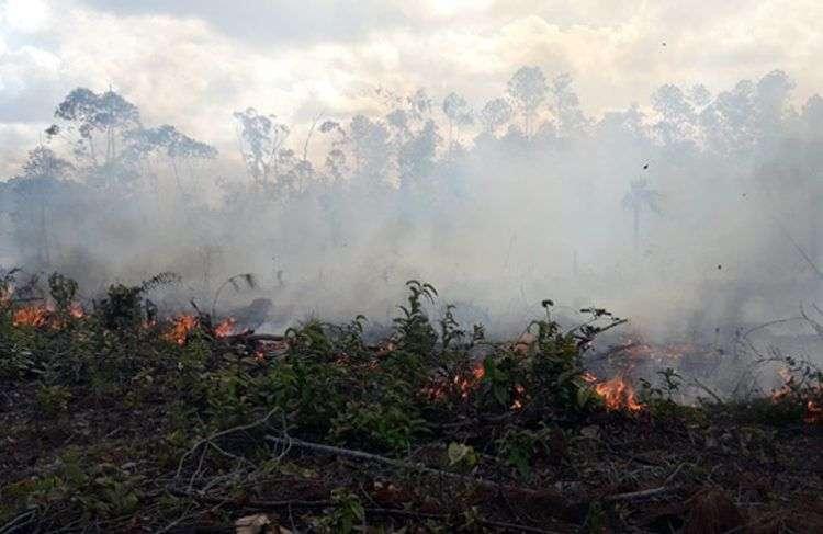 Gran incendio forestal en Pinar del Río. Foto: Daimí Díaz Breijo / Tele Pinar.