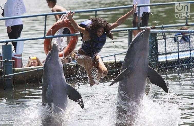 Nadando con delfines. Foto: Otmaro Rodríguez.