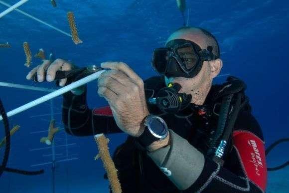 Vivero de corales. Foto: Cubadebate.