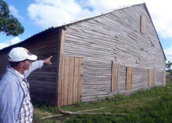 Casa de tabaco en Pinar del Río con un nuevo diseño de puntal más bajo, que protege mejor a las hojas contra los efectos de intensas lluvias y tormentas. Foto: Ronald Suárez / Granma.