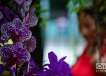 Festival de Orquídeas de 2019, en la Quinta de los Molinos, en La Habana. Foto: Otmaro Rodríguez.