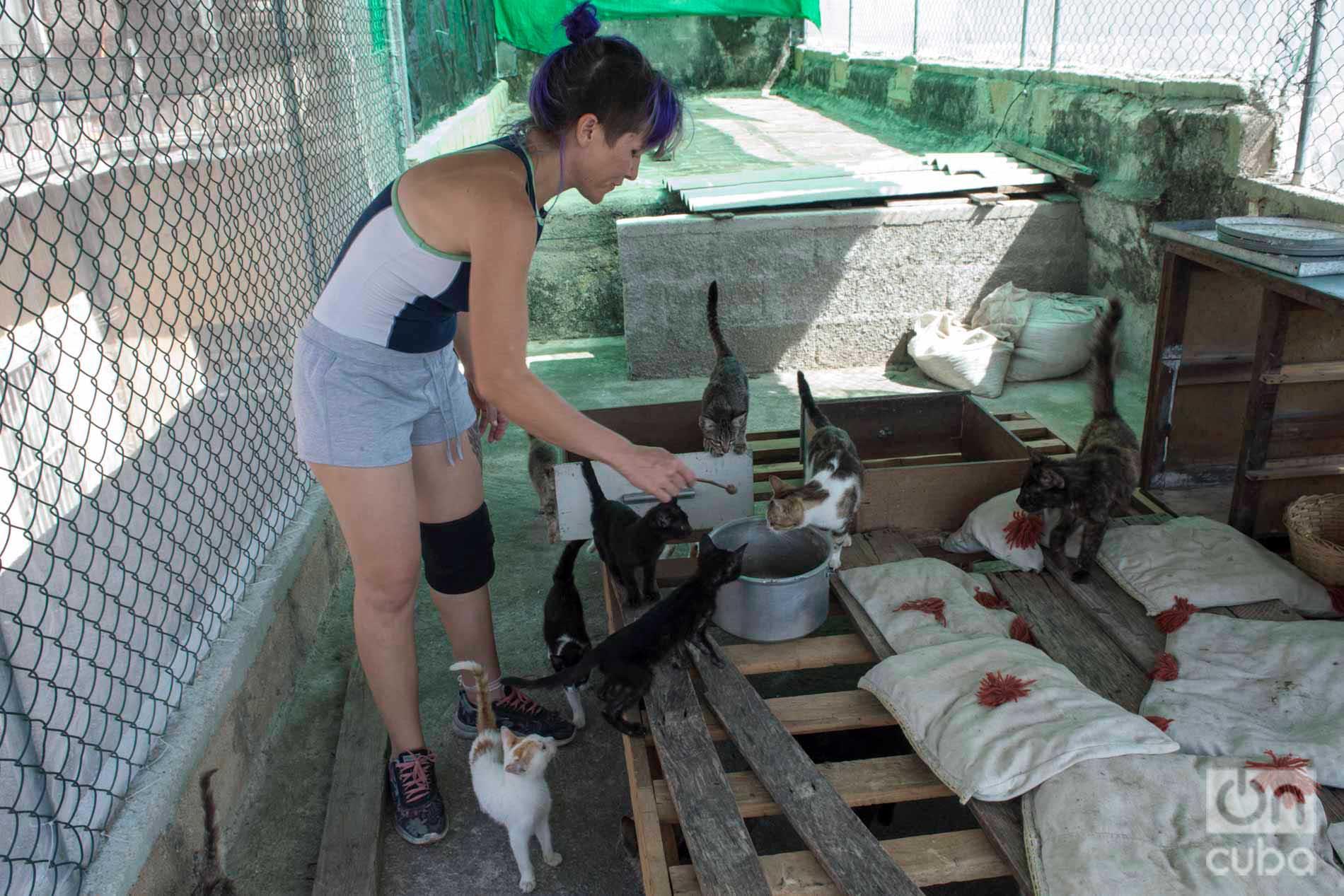 Lis Núñez alimentando a varios de los gatos de su refugio en el poblado habanero de Guanabacoa. Foto: Otmaro Rodríguez.