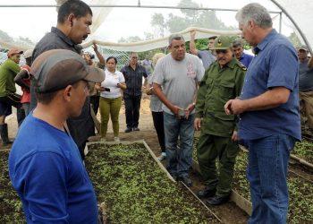 El presidente cubano, Miguel Díaz-Canel, en un recorrido por una empresa agrícola. Foto: Estudios Revolución / Archivo.