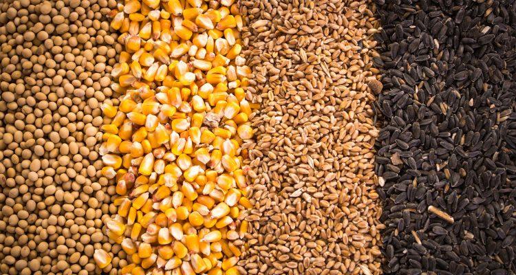 Los granos, el mayor rubro de exportación posible de Estados Unidos a Cuba por ahora. Imagen: Robobank.com