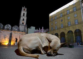 """Obra de la serie fotográfica """"Tal vez ahora puedan vernos"""", de Gabriel Guerra Bianchini, dedicada a los animales callejeros de la capital cubana."""