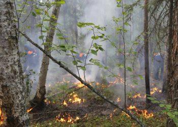 Foto del incendio en la región de Krasnoyarsk en Rusia el 3 de agosto del 2019.  Foto: Ministerio de Situaciones de Emergencia, Región  Krasnoyarsk, vía AP.