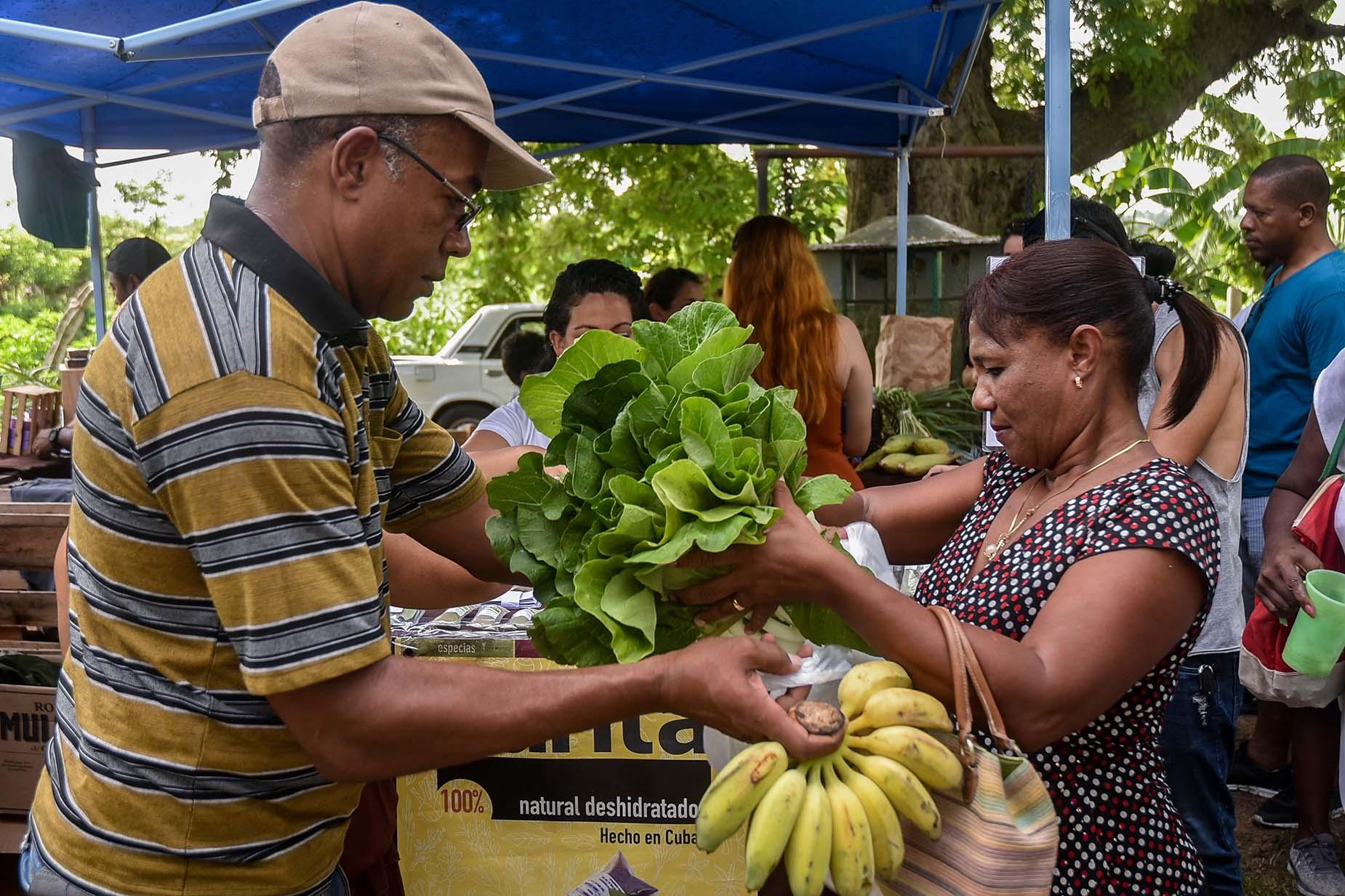 Mercado de la Tierra realizado en la finca privada Vista Hermosa, en la periferia de La Habana. Foto: Ariel Cecilio Lemus / Cubapaladar / Archivo.